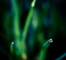 Fresh Grass by schwarz
