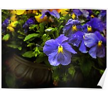 Pansy Planter Poster