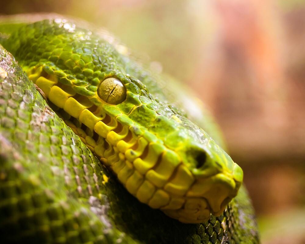 Snake Eye by schwarz