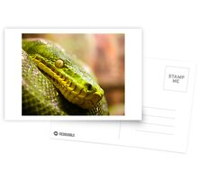 Snake Eye Postcards