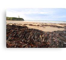 ballybunion seaweed Metal Print