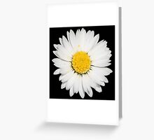Top View of a White Daisy Isolated on Black Greeting Card