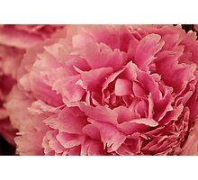 Fluffy flower Photographic Print