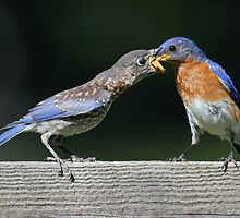 A Mouthful by Rob Lavoie