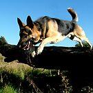German Shepherd Jumping (Twist) by TesniJade