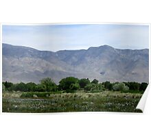 Mountains And Wildflowers Poster