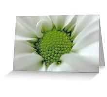 Daisy Opening Greeting Card