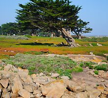 A Cypress On Ocean View by Diego Re