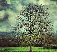 Clouds and Tree by Mary Ann Reilly