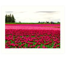 Tulip Fields Art Print