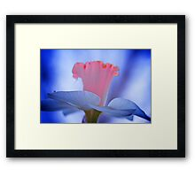 Painted Daffodil Framed Print