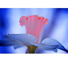 Painted Daffodil Photographic Print