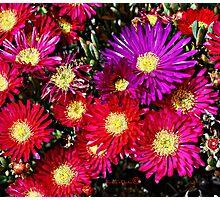 Purple pink Photographic Print