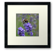 Busy Busy Bumblebee Framed Print