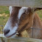 Cheeky Goat by Louise Lench