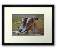 Cheeky Goat Framed Print