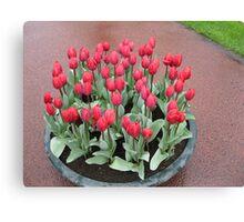 Bathtime for Tulips! Canvas Print