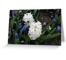 Hyacinths Great and Small - Keukenhof Gardens Greeting Card