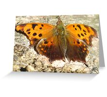 Eastern Comma Polygonia Comma Greeting Card