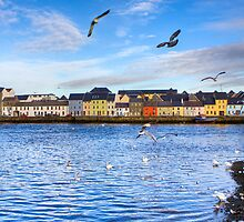 Across Galway Harbor by Mark Tisdale