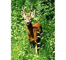 Hello Deer .........! Photographic Print