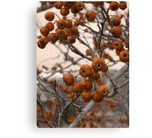 Hawthorn Canvas Print