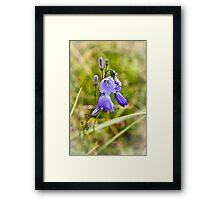 Wild Harebells Framed Print