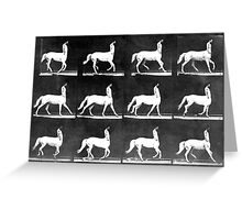 A Study of the Movement of Centaurs (Canter). Greeting Card