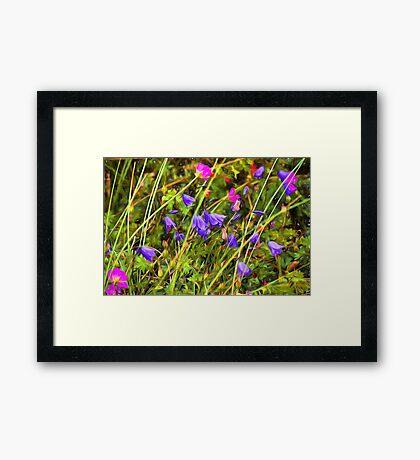 Harebells and Geraniums textured Framed Print