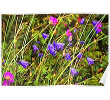 Harebells and Geraniums textured Poster