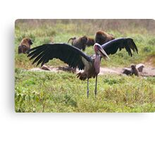 Marabou Stork Wing Flapping Canvas Print