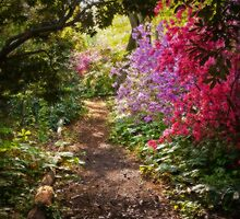 A walk down the Garden Path by Debra Fedchin