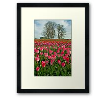 Variations Framed Print