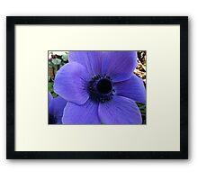 Bright anemone blue Framed Print