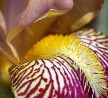 Bearded iris Mary Todd Sticker