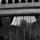 caged entity by salvadorleary