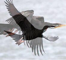 Black Cormorant Fantasy by alycanon