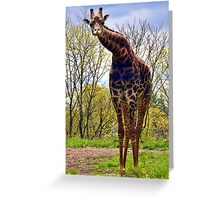 WHAT YOU LOOKIN' AT GIRAFFE Greeting Card