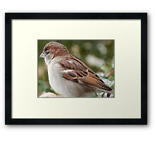 SPARROW (6) Framed Print