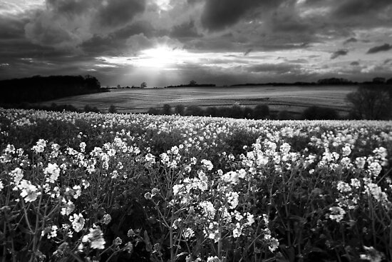 A Leading Light BW by Andy Freer