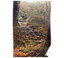 Natures Garden Path Poster