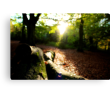 lost in the woods Canvas Print