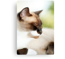 Sleepy Puss Canvas Print