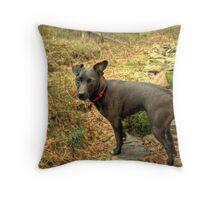 Wallflower At High Dam Throw Pillow