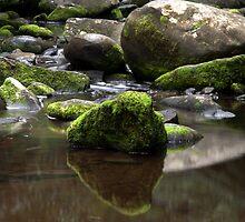 Reflections by John Sharp
