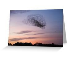 Bird Cloud - Starlings Preparing To Roost Greeting Card