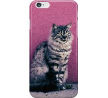Cat iPhone Cover iPhone Case/Skin