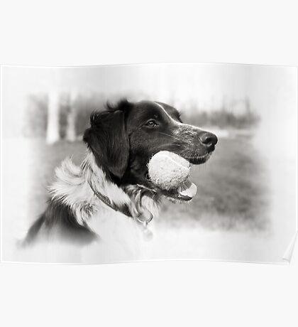 Black & White Dog Poster