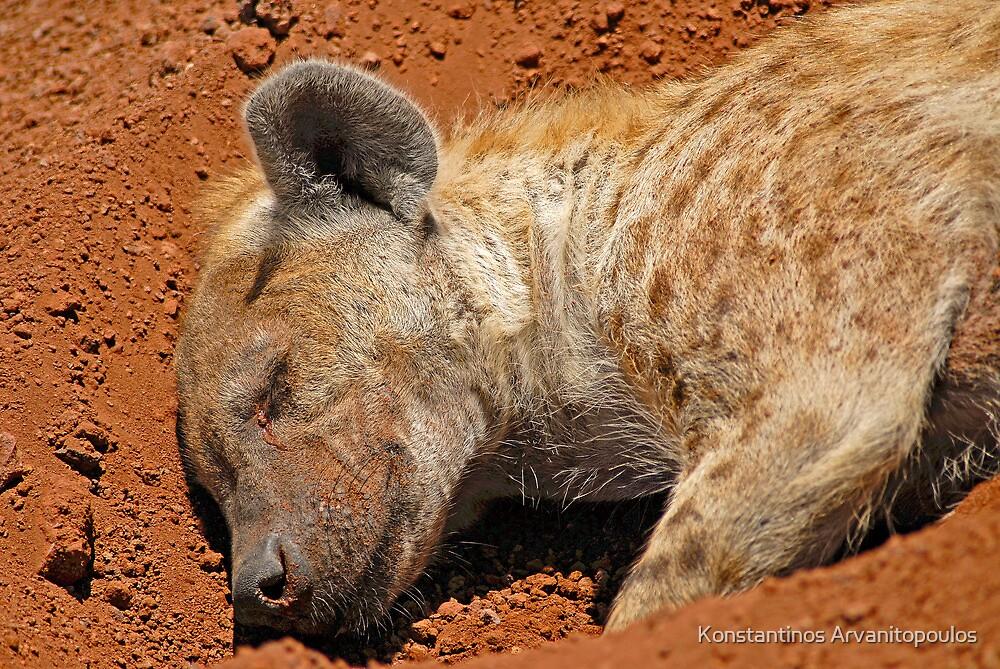 A quick nap... by Konstantinos Arvanitopoulos