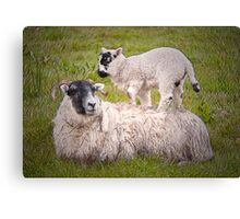 Mother & Lamb Canvas Print